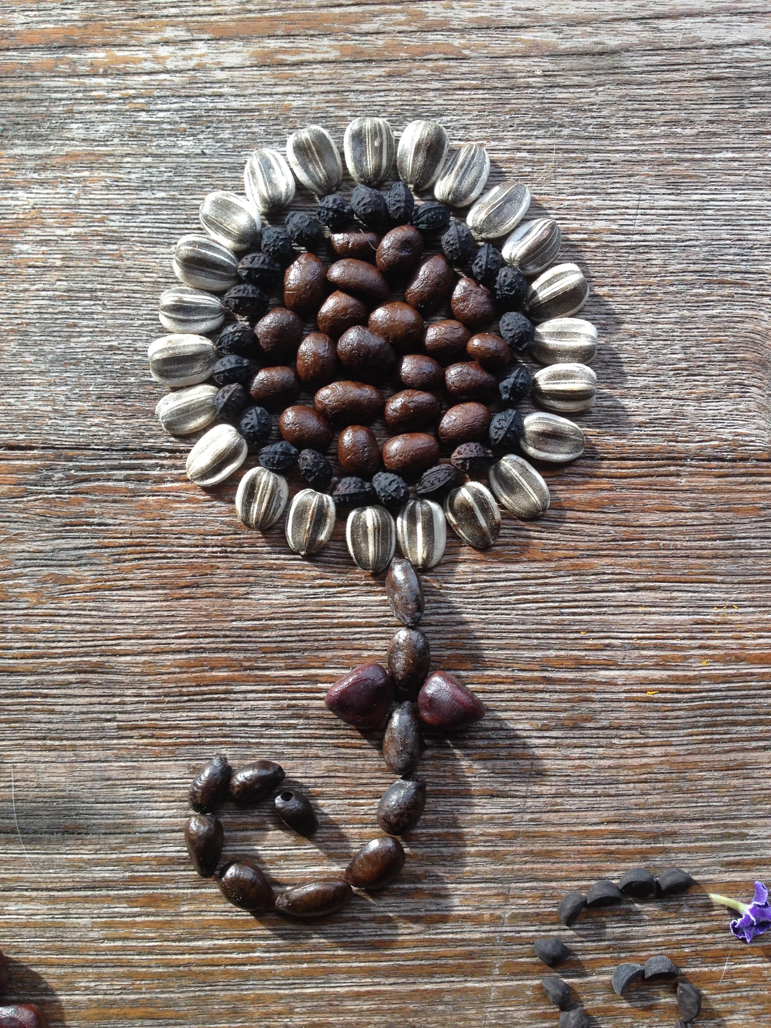 Seed flower 13 - coffee