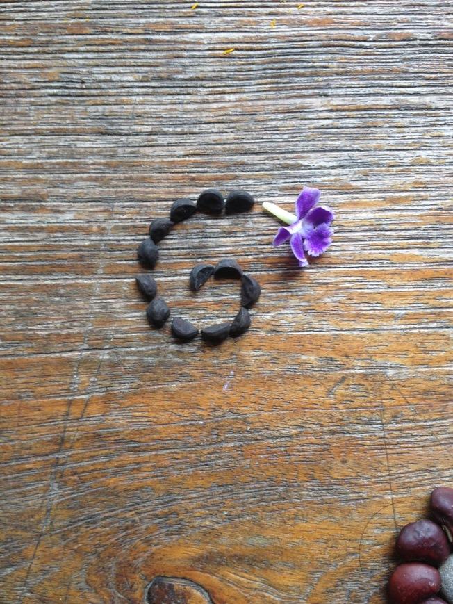 Seed flower 16