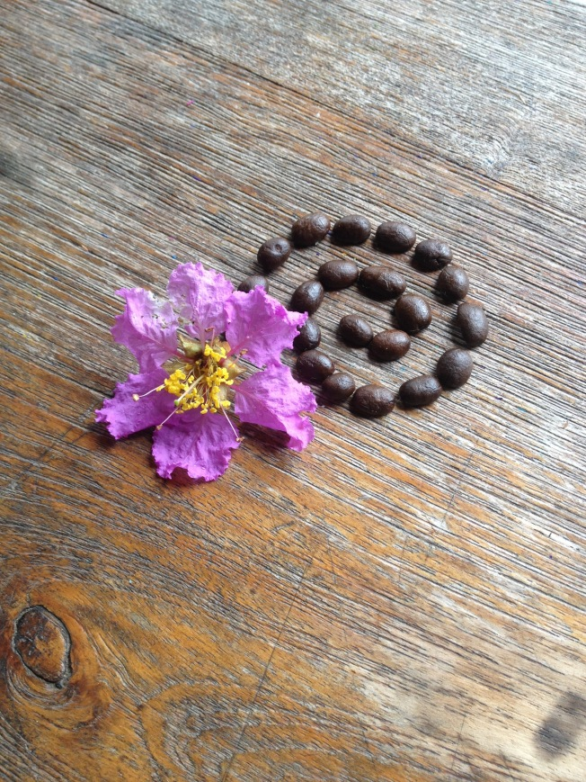 Seed flower 19