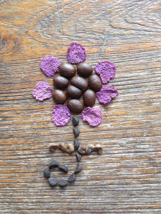Seed flower 22