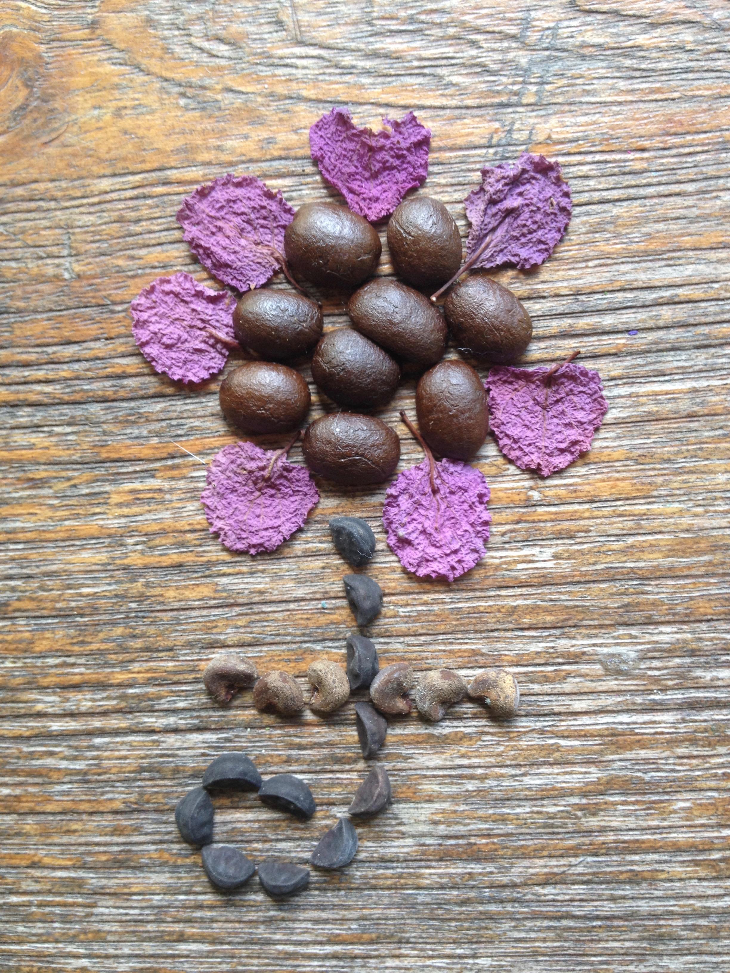 Seed flower 26