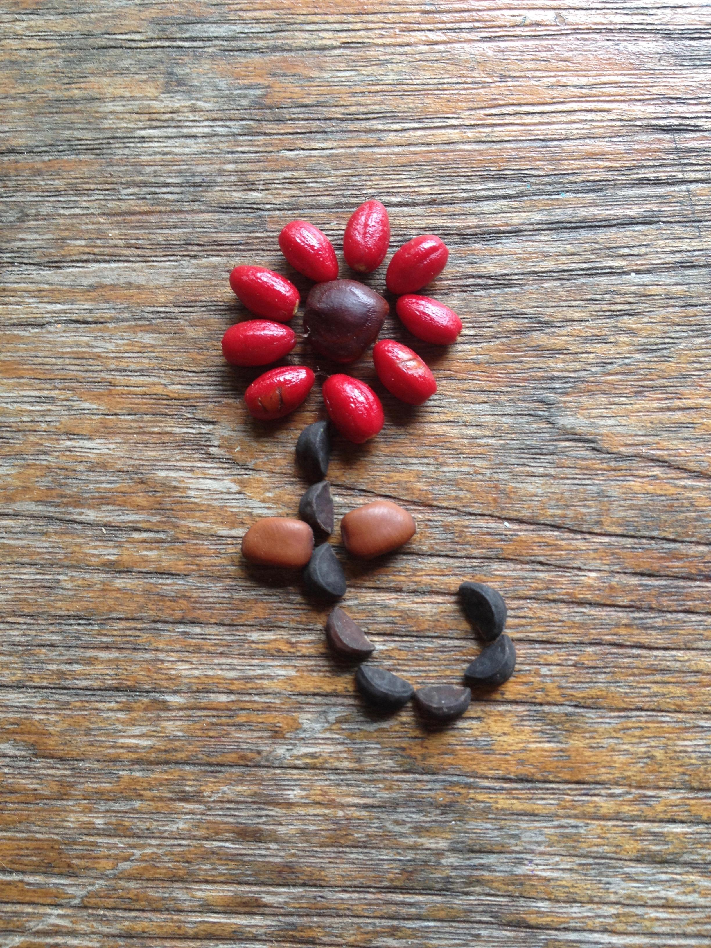 Seed flower 41