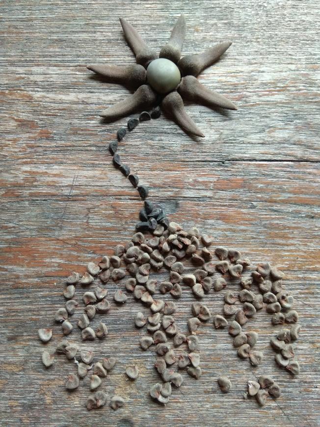 Seed flower 81