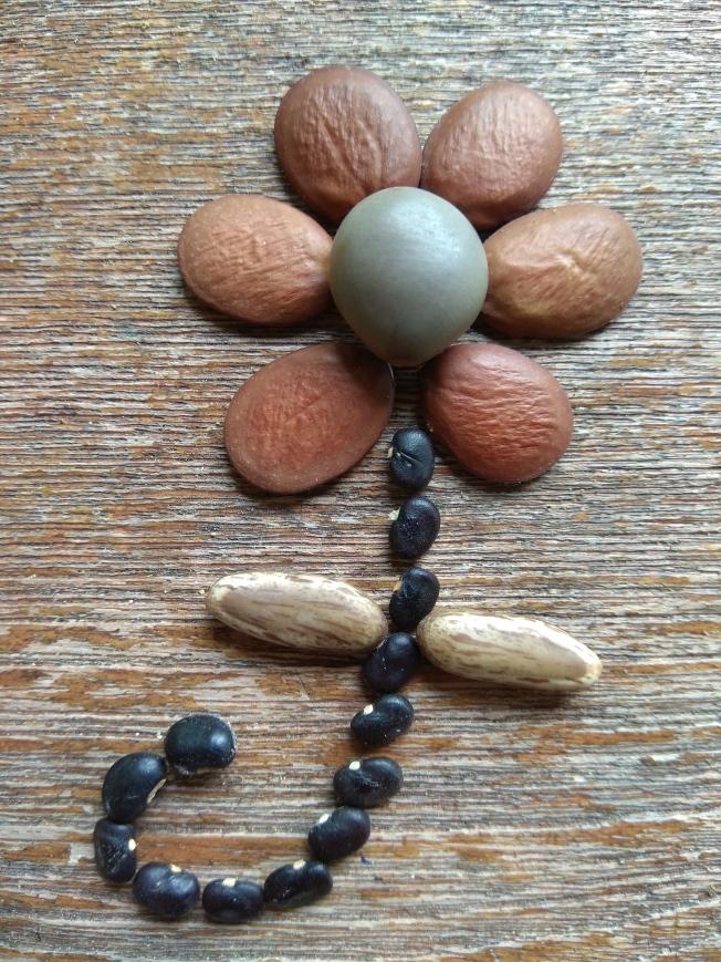 Seed flower 82