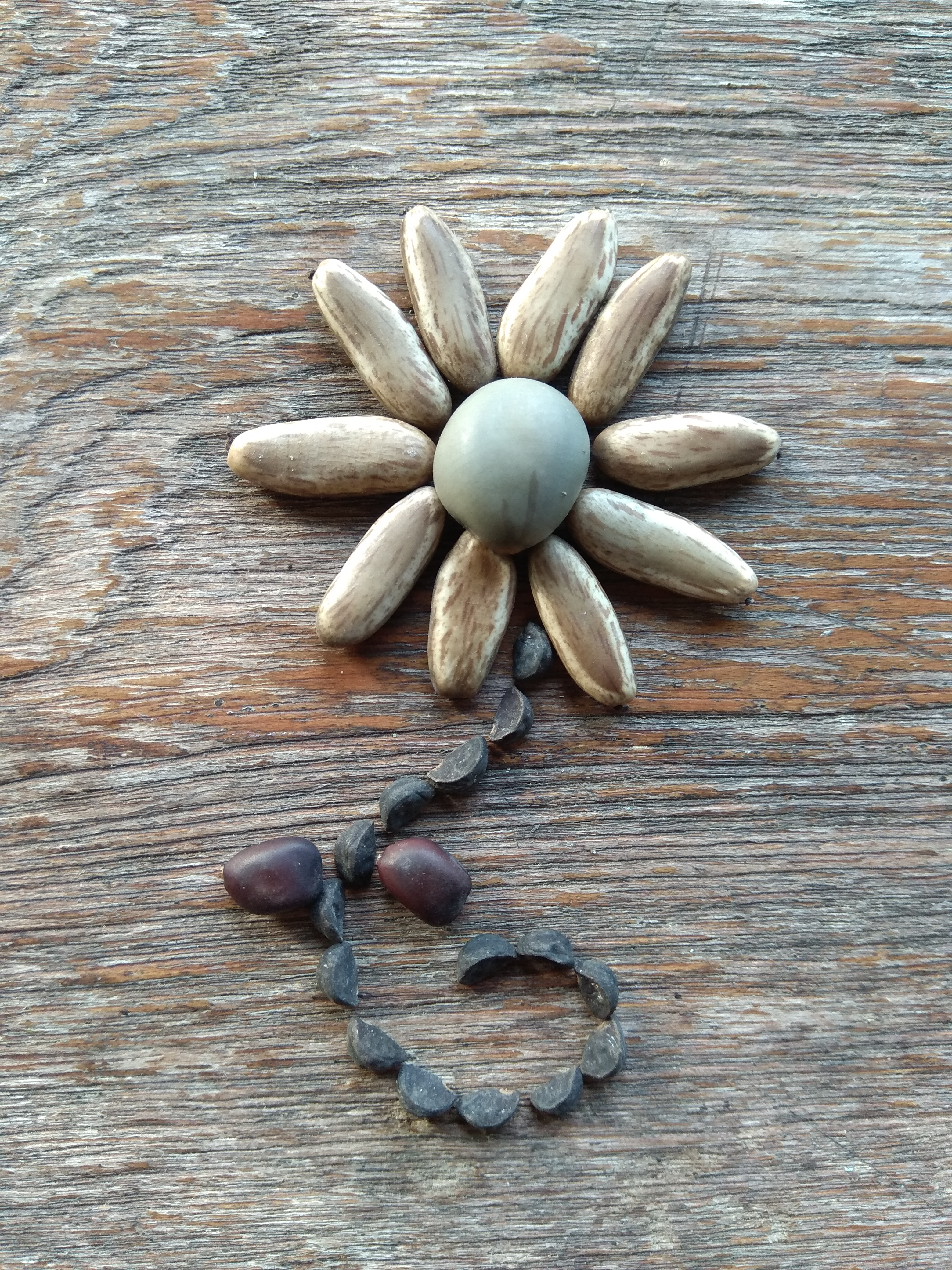 Seed flower 109